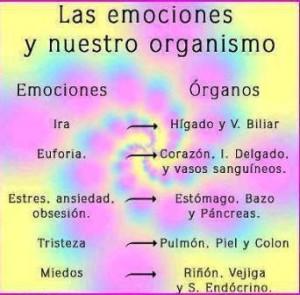 Órganos y emociones