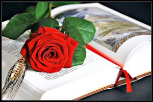 Un libro y una flor para Sant Jordi