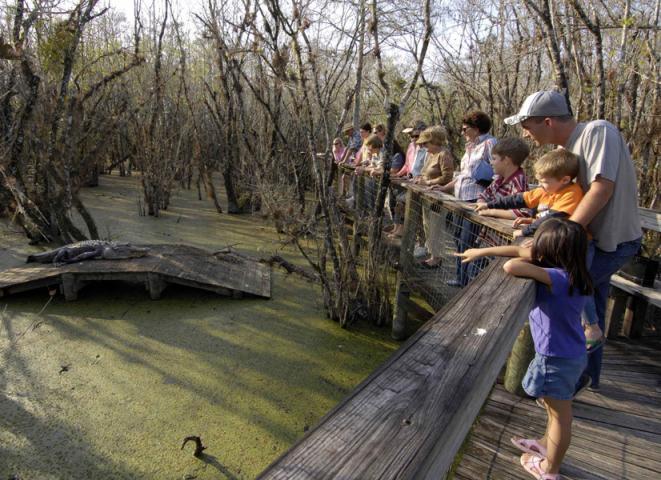 parque nacional everglades fica - photo #30