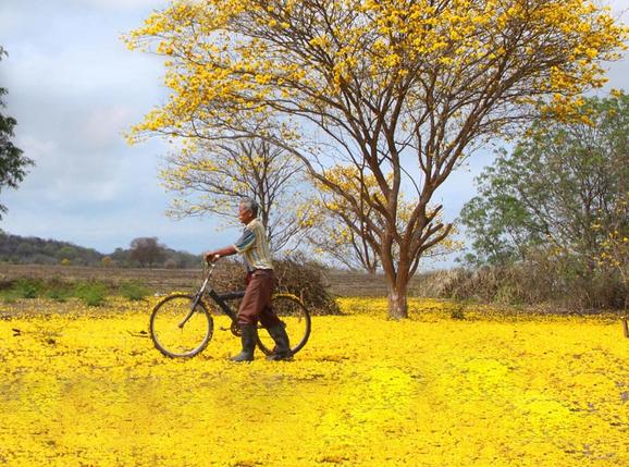 Los Guayacanes en Bicicleta
