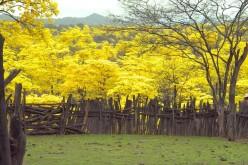 Loja: Un paraíso multicolor en Ecuador