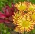 La reconocida fotografa Evelyn Díaz nos regala sus bellísimas flores. ¡Disfrútenlas!