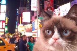 Grumpy Cat, la celebridad más gatuna de internet