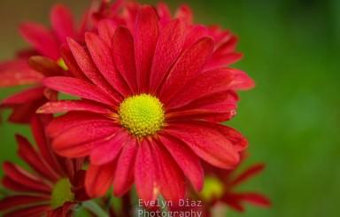 La fotógrafa Evelyn Díaz nos regala sus bellísimas flores