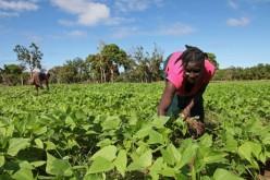 Mujeres trabajadoras: ¿Qué países las apoyan?