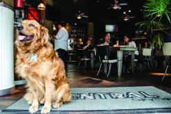 ¿Cuáles son las ciudades más cómodas para tener mascotas en EE.UU?