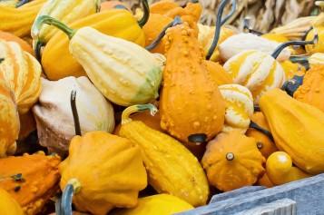 Los veganos también celebran Thanksgiving