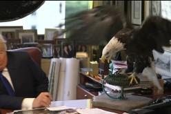 Donald Trump y el águila que no le perdonó