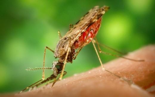 Detectan primer contagio de zika en EE.UU por vía sexual