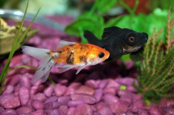 Asesina de peces
