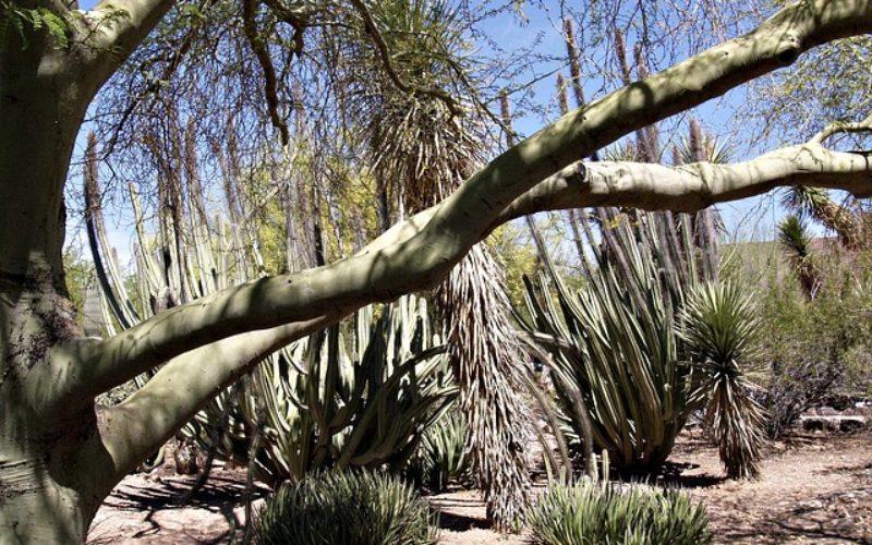 El desierto de Sonora: Una enorme máquina de matar ilegales