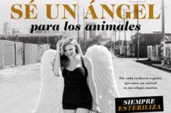 """Marjorie de Sousa se convierte en un """"Ángel"""" para los animales"""