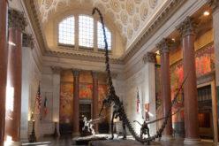 El Museo Americano de la Historia Natural de EE.UU firma acuerdo con Cuba