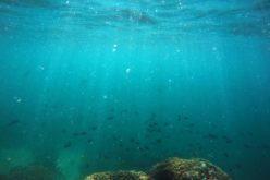¿Por qué ha generado controversia la creación del primer monumento nacional marino?