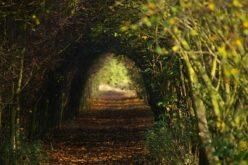 Caminos de luz y oscuridad