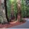 El Big Basin Redwoods, un encuentro con la belleza de los grandes bosques