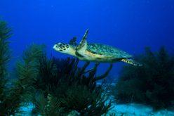 Los arrecifes de coral, las selvas tropicales del mundo subacuático