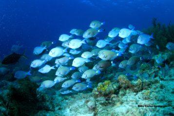 ¿Por qué los peces se agrupan en cardúmenes?