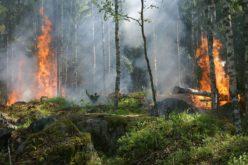 Hay más de 100 incendios forestales activos en Florida