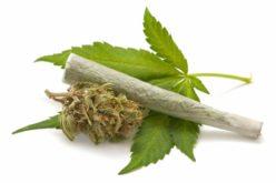 ¿Qué pasa si fumamos marihuana todos los días?