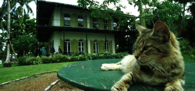 Los gatos de seis dedos de la casa de Hemingway sobrevivieron a Irma