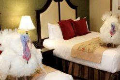 Los pavos que indultará Donald Trump se alojan en un hotel de lujo